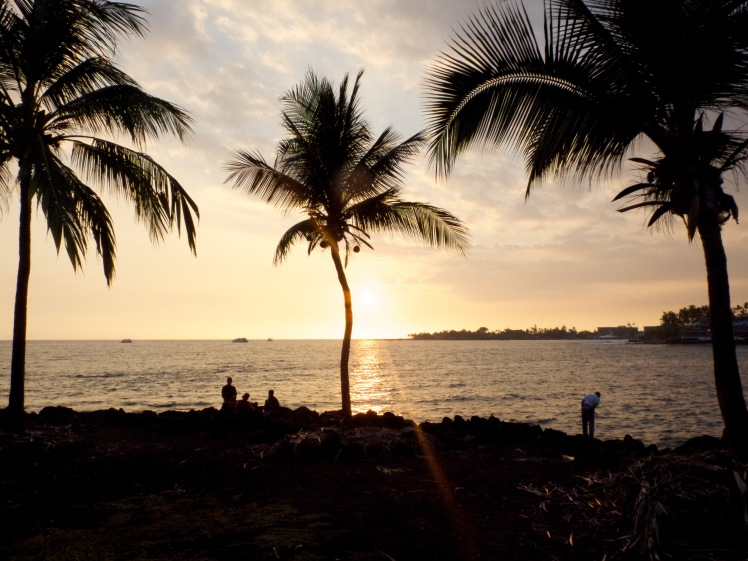 Palmtrees on the shore on Kona, Hawaii (credit: Christina Williamson)